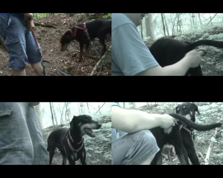 207942128 0505 zoogay doggy ass play pt1 - Doggy Ass Play Pt1 - Male Bestiality Porn
