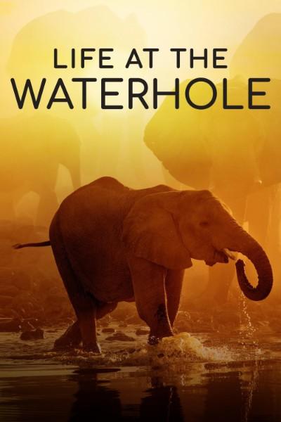 Life at the Waterhole S01E01 720p HEVC x265-MeGusta